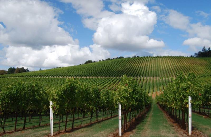Vineyard near The Bergson.