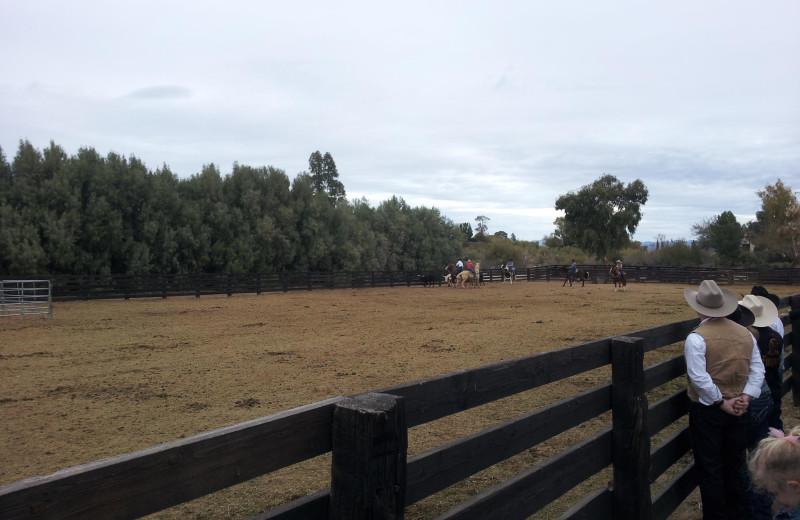 Horses at Vee-Bar Guest Ranch.