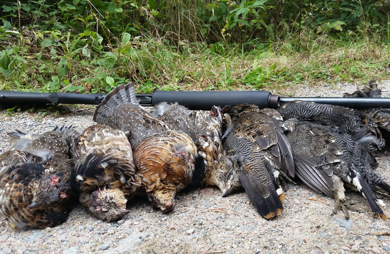 Hunting at Cliff Lake Resorts.