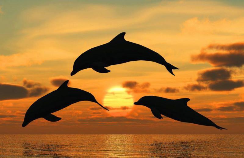 Dolphins at Sanctuary Vacation Rentals at Sandbridge.