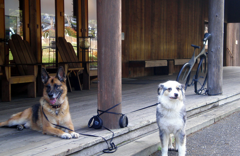Pets welcome at Sea Ranch Lodge.