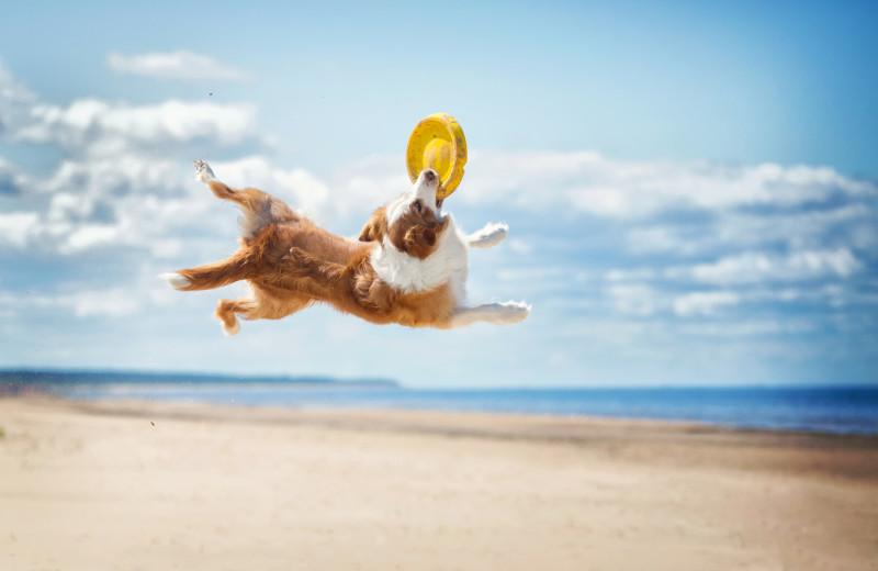 Pets welcome at Oceanfront Getaways.