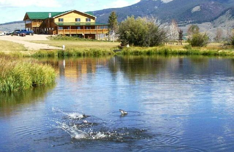 Fish jumping at Montana High Country Lodge.