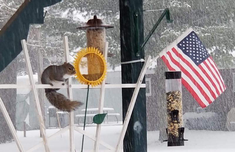 Bird feeder at Pine Beach Resort-Side Lake.