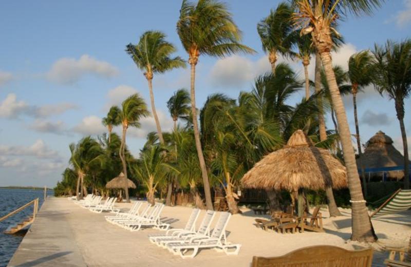 The beach at Hampton Inn & Suites Islamorada.