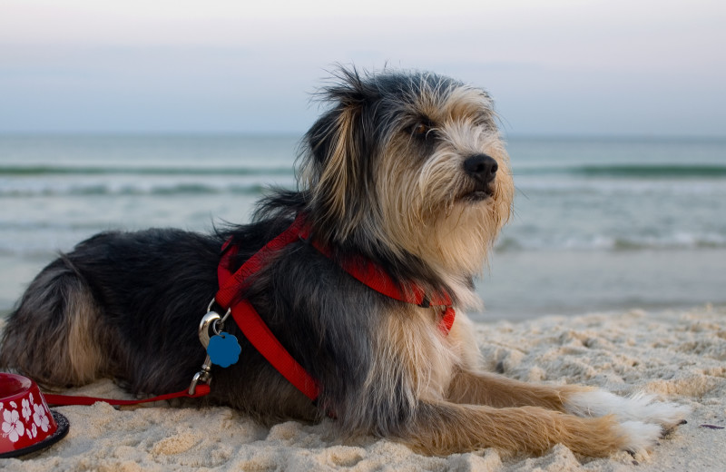 Pets welcome at Gulf Shores Rentals.