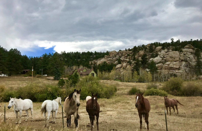 Horses at Sundance Trail Guest Ranch.