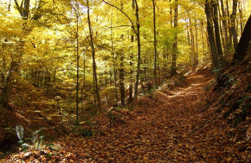 Fall at Creeks Crossing Cabins.