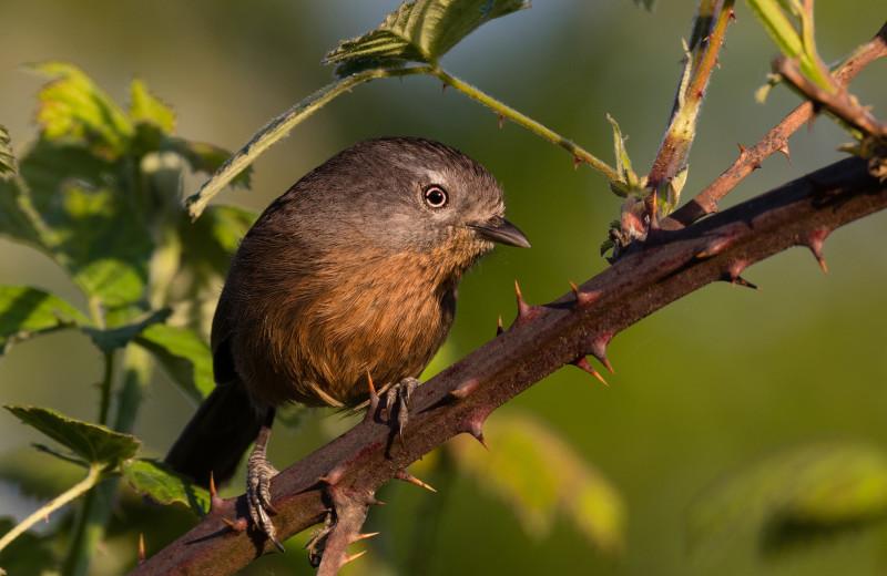 Birding at WildSpring Guest Habitat.