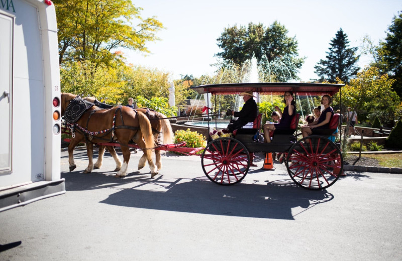 Wedding carriage at Villa Roma Resort and Conference Center.