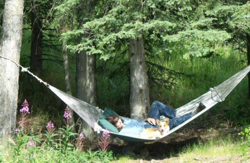 Hammock at Hungry Moose Bed and Breakfast.