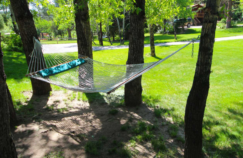 Hammock at Streamside on Fall River.