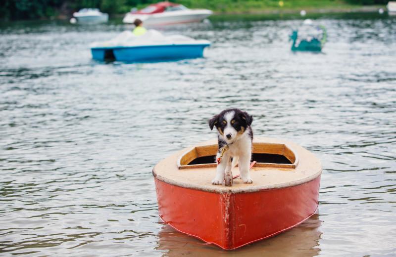 Pet Friendly at Basin Harbor.