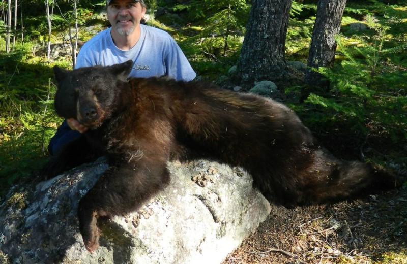 Bear hunting at Cliff Lake Resorts.