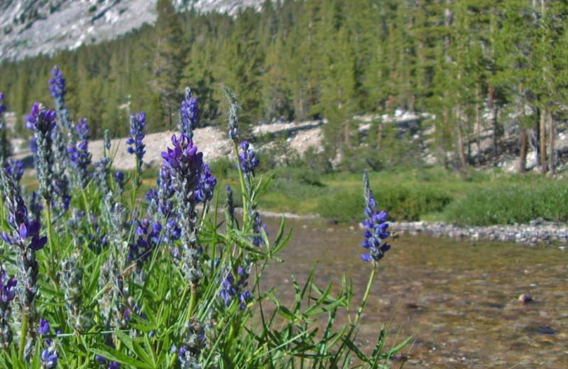 River near Yosemite Peregrine B & B.