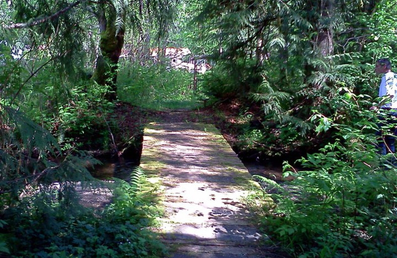 Nature trails at Hood Canal Cottages.
