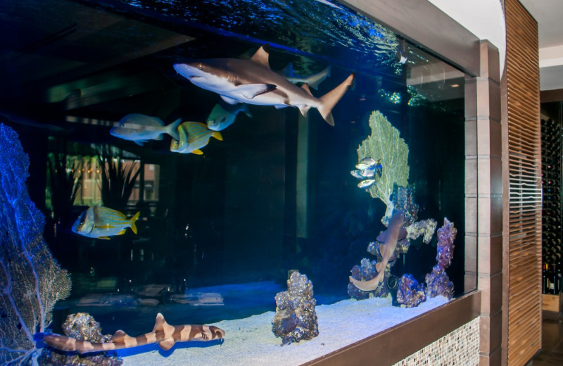 Fish tank at The Seagate Hotel & Spa.