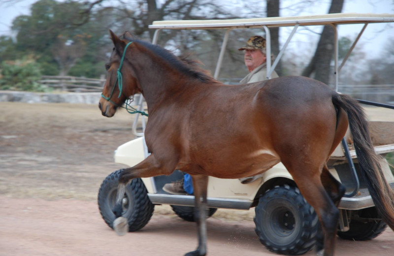 Horse at Fredericksburg Ranch.