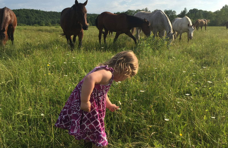 Horses at Ranch Rudolf.