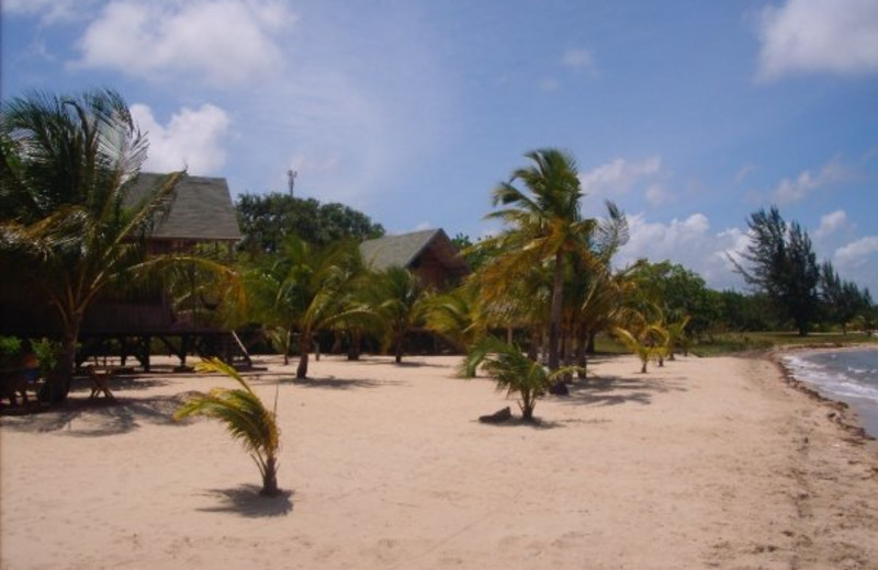 Exterior view of Green Parrot Beach Houses and Restaurant.