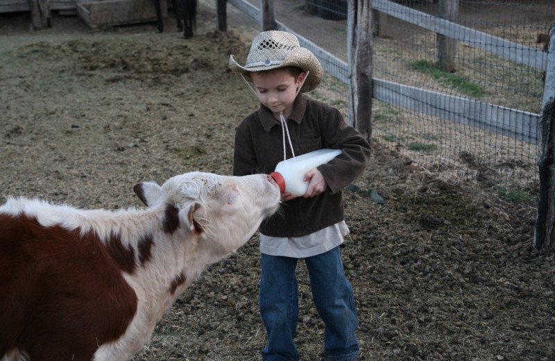 Feeding cattle at Rankin Ranch.