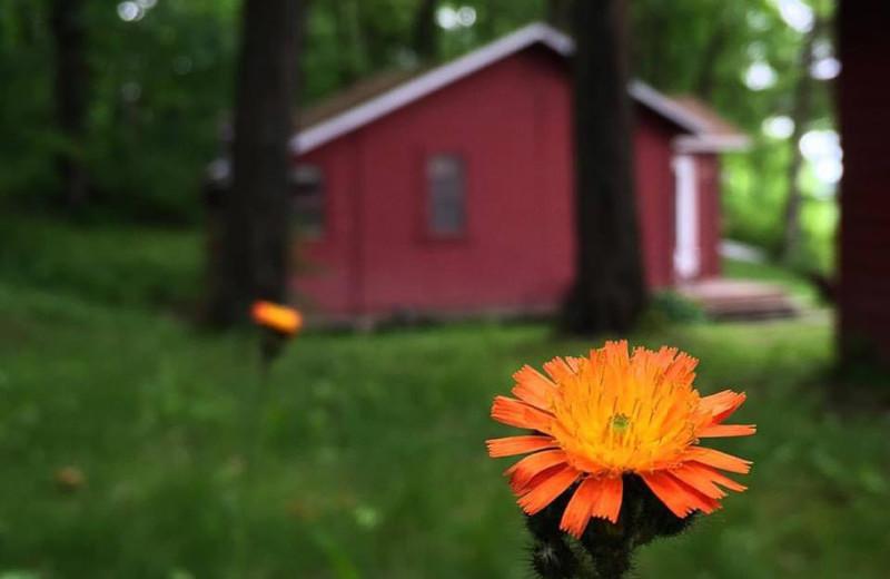 Cabin exterior at Driftwood Resort.