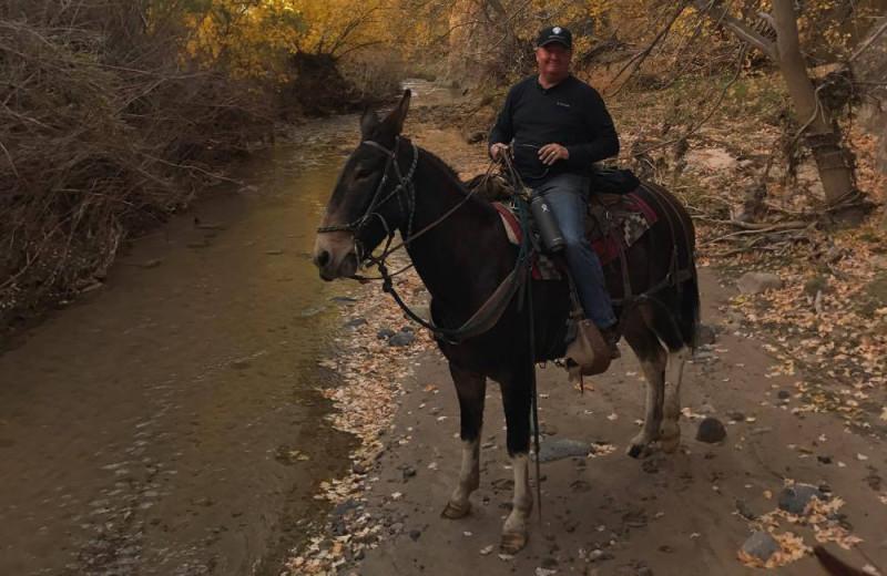 Horseback riding at Escalante Yurts.
