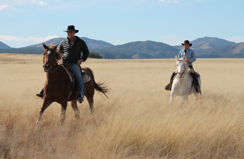 Riding horses at Circle Z Ranch.