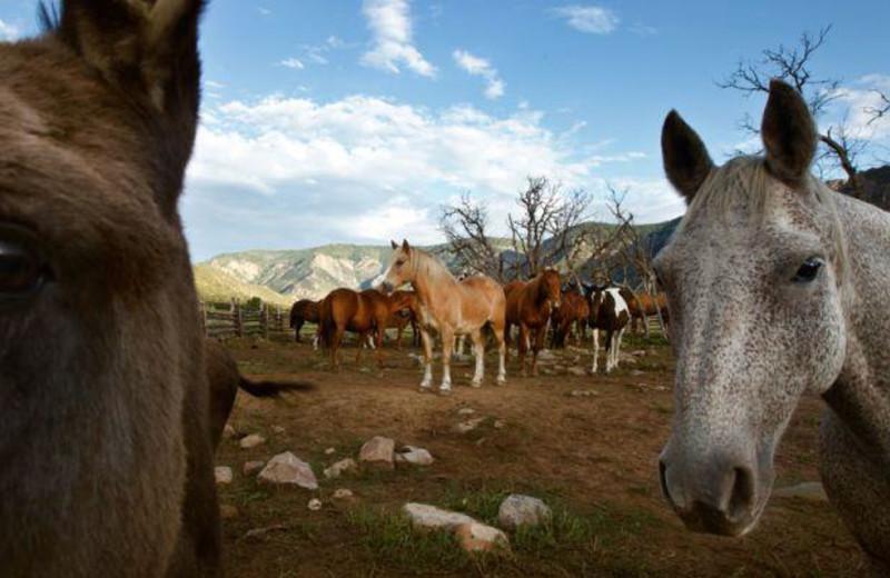 Horses at Gateway Canyons Resort