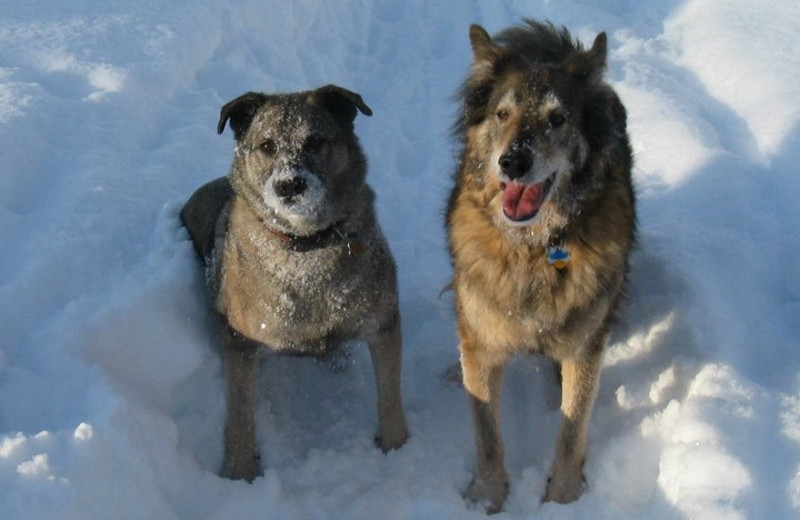 Pet friendly accommodations at Five Star Rentals of Montana.