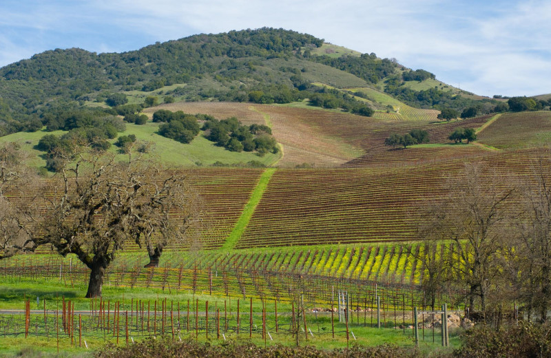 View of vineyard from Deerfield Ranch.