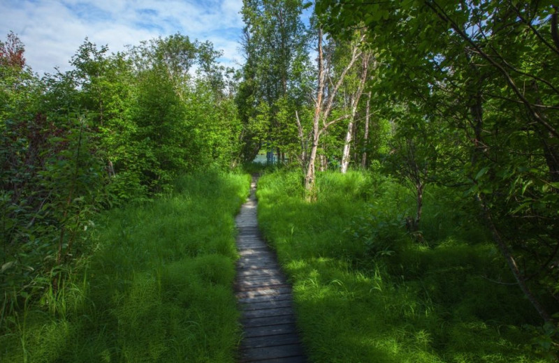 Path at Alaskan Fishing Adventures.