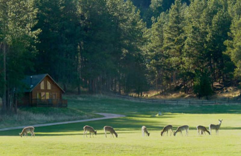 Deer at Newton Fork Ranch.