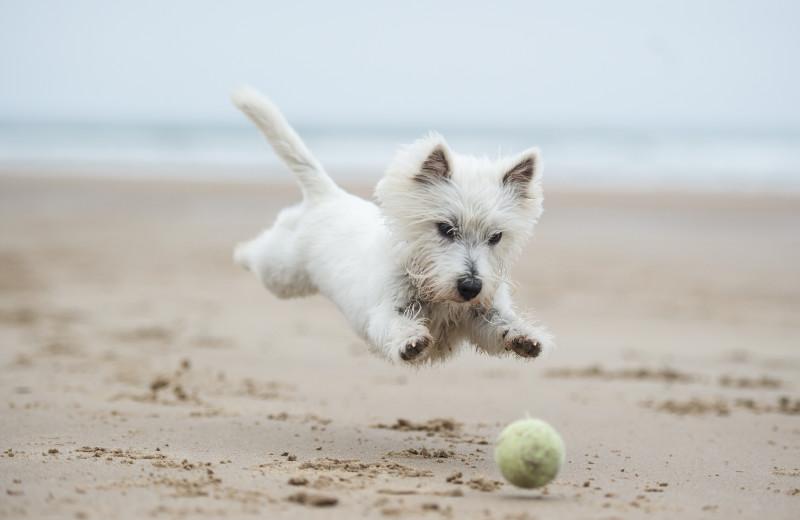 Pets welcome at Footbridge Beach Motel.