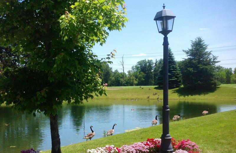 Pond view at Fairway Suites.