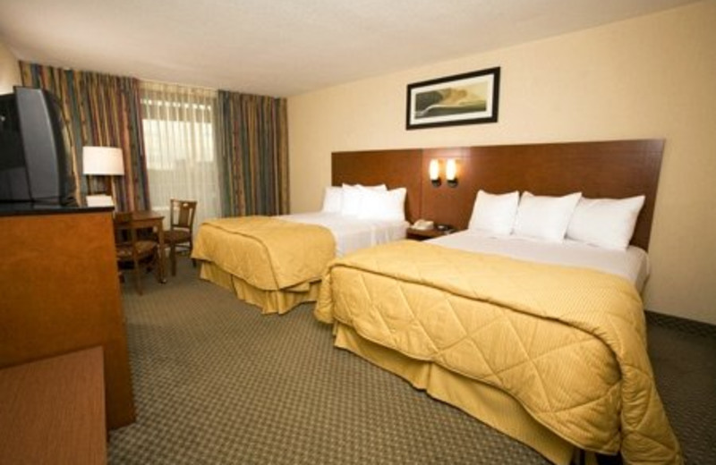 Two Queen Room at Best Western Lake Buena Vista