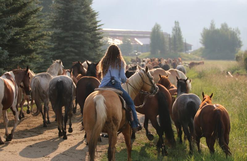 Horses at Vista Verde Ranch.