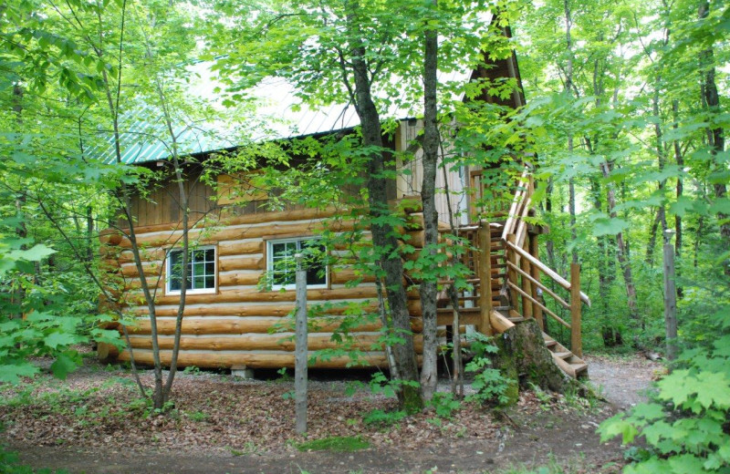 Cabin exterior at Wolf Den Hostel and Nature Retreat.