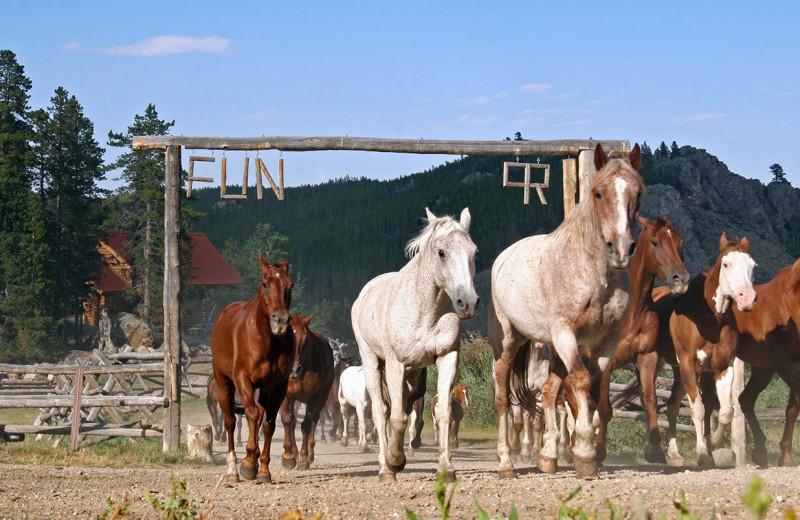 Horses running at Paradise Guest Ranch.
