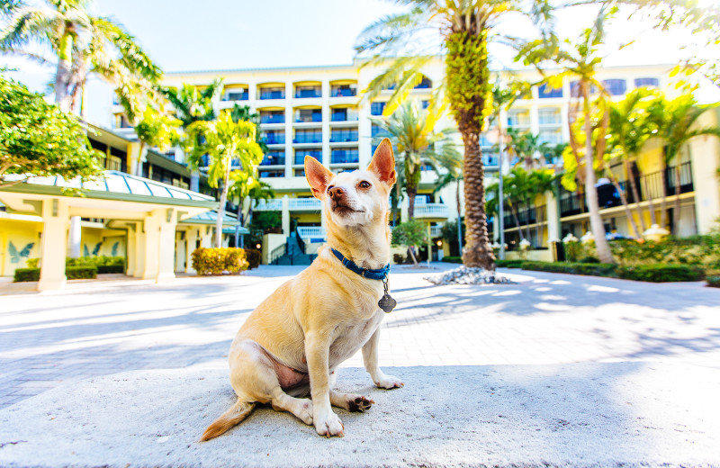 Pets welcome at Sirata Beach Resort.