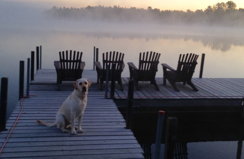 Pets welcome at Glenmore Resort.