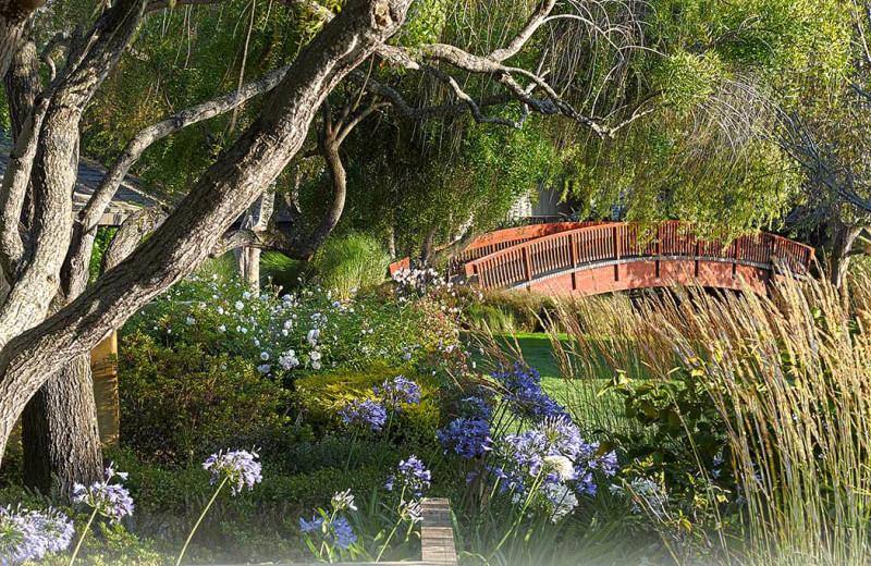Pond view at Quail Lodge Resort.