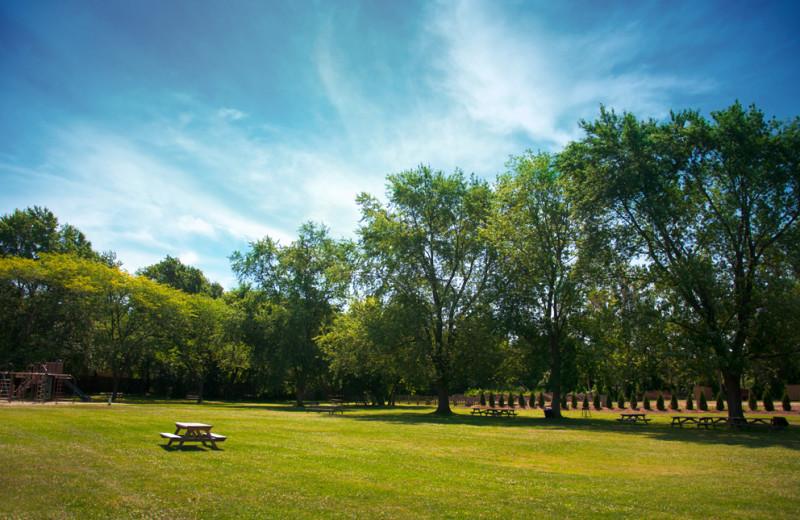 Picnic area at Vine Ridge Resort.