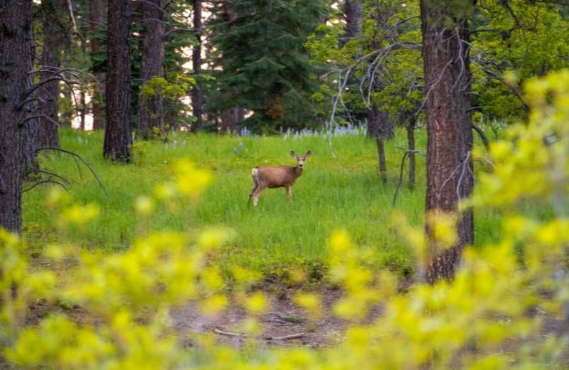 Deer at Colorado Trails Ranch.