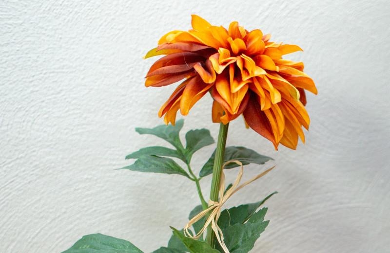 Flower at Mark III Inn.