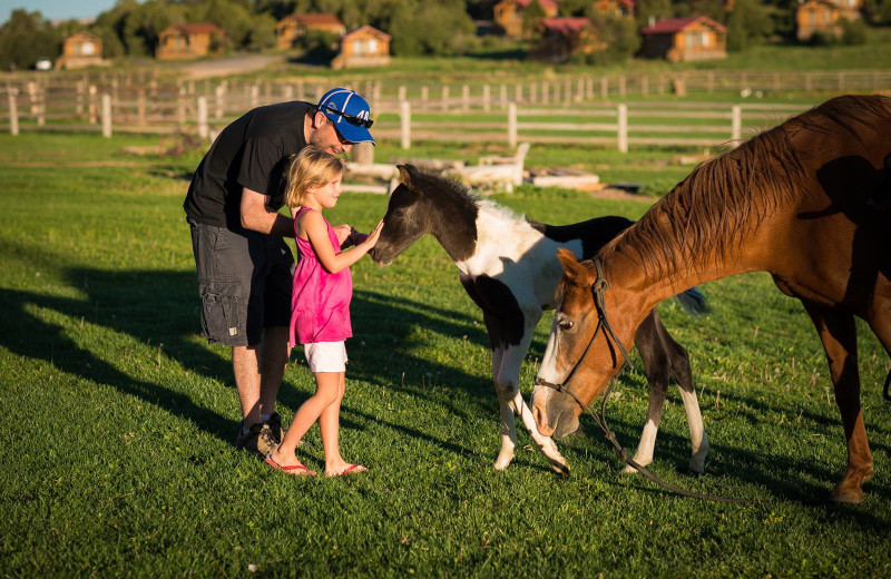 Petting the horses at Zion Mountain Ranch.