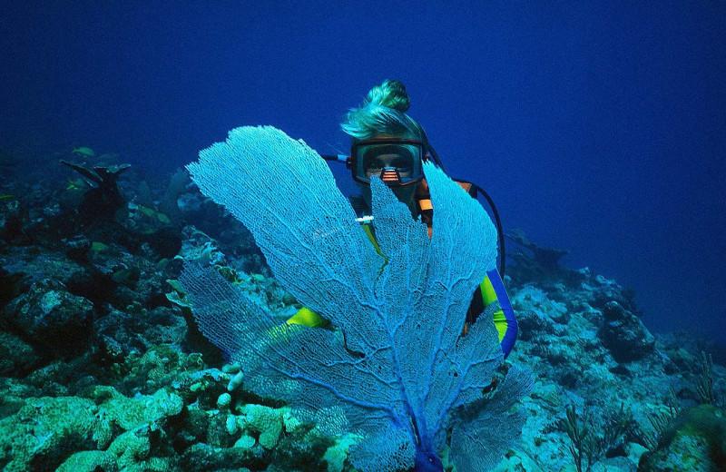 Diving at Royal Solaris - Los Cabos.