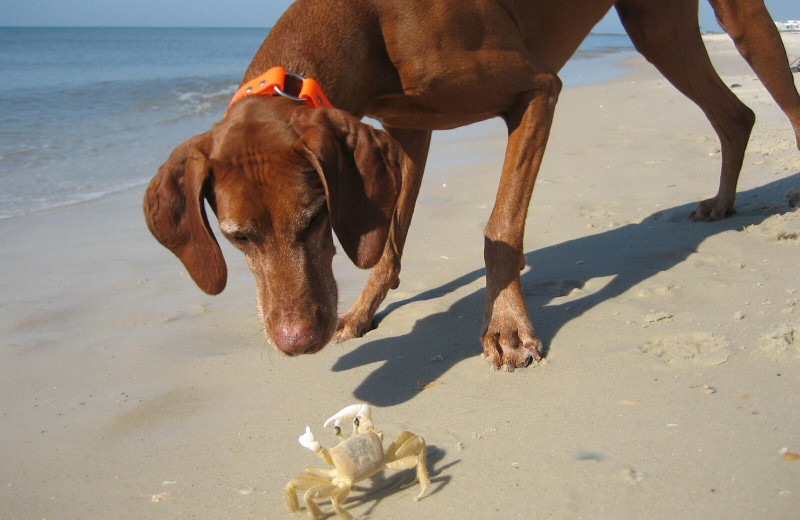 Pets welcome at Resort Vacation Properties of St. George Island.