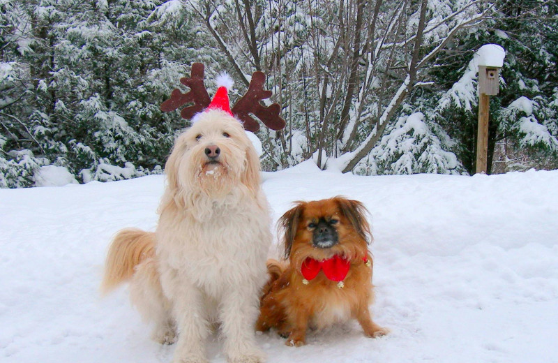 Pets welcome at Foscoe Rentals.