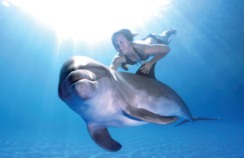 Dolphin Adventures at Pueblo Bonito Sunset Beach